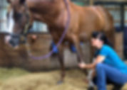 Winning Hand Equine 2_edited.jpg