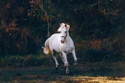 whiterunninghorsefreetouse2