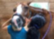 Winning Hand Equine 4_edited_edited.jpg