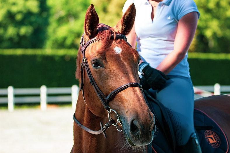 horseriderpleasant.jpg