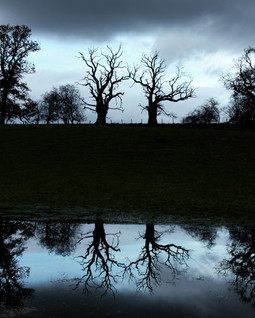 Reflection 005