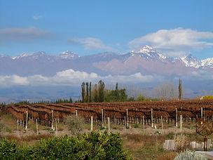 Bodegas en San Rafael y en Valle de Uco Mendoza