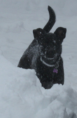 Jack playing in the snow