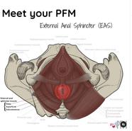 Meet your PFM