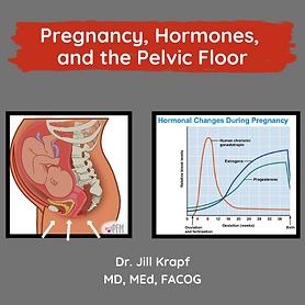 Copy of Pregnancy, Hormones, and the Pel