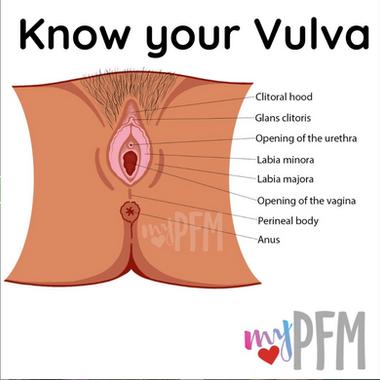 Know your vulva