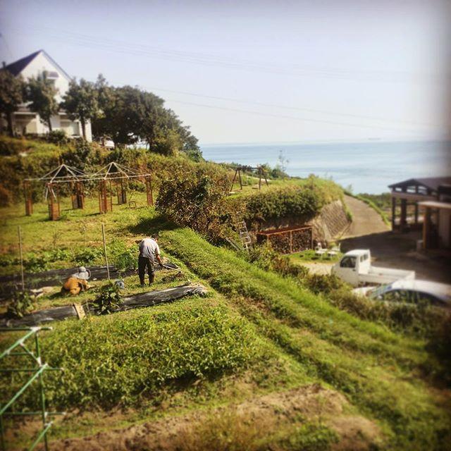 毎週可愛いワンちゃんと現れる畑の助っ人。_#淡路島 #awajiisland #パタジェウミソラ #partageumisola#蕪の種まき