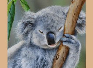 Koala kookas possum Wildlife art