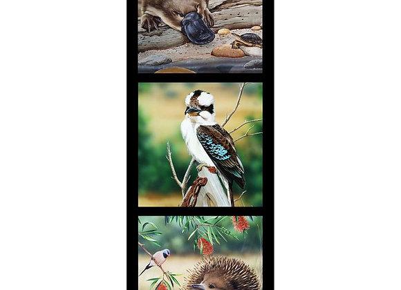Kooka Echidna Platypus  Wildlife Art