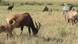 Prestige Safaris