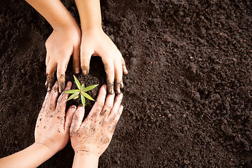 child-hands-holding-caring-young-green-plant.jpg