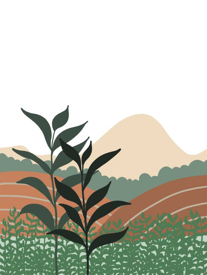 packaging design for a tea project