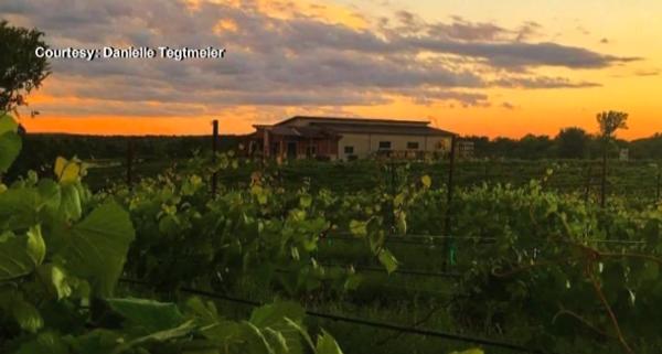 View of the estate vineyard at Liquid Art Winery in Manhattan, KS