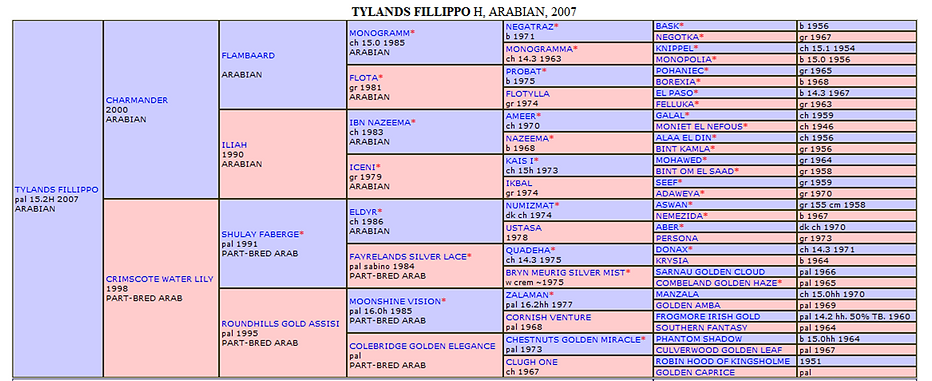 Tylands Fillippo Pedigree