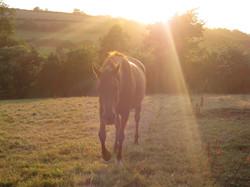 Horses 266