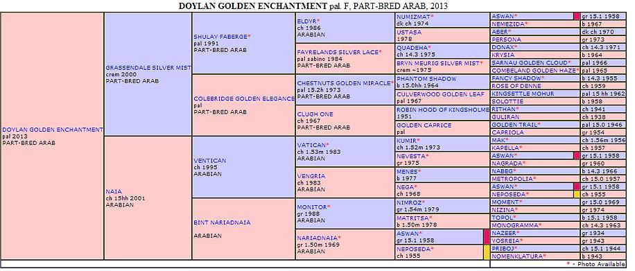 Doylan Golden Enchantment Pedigree