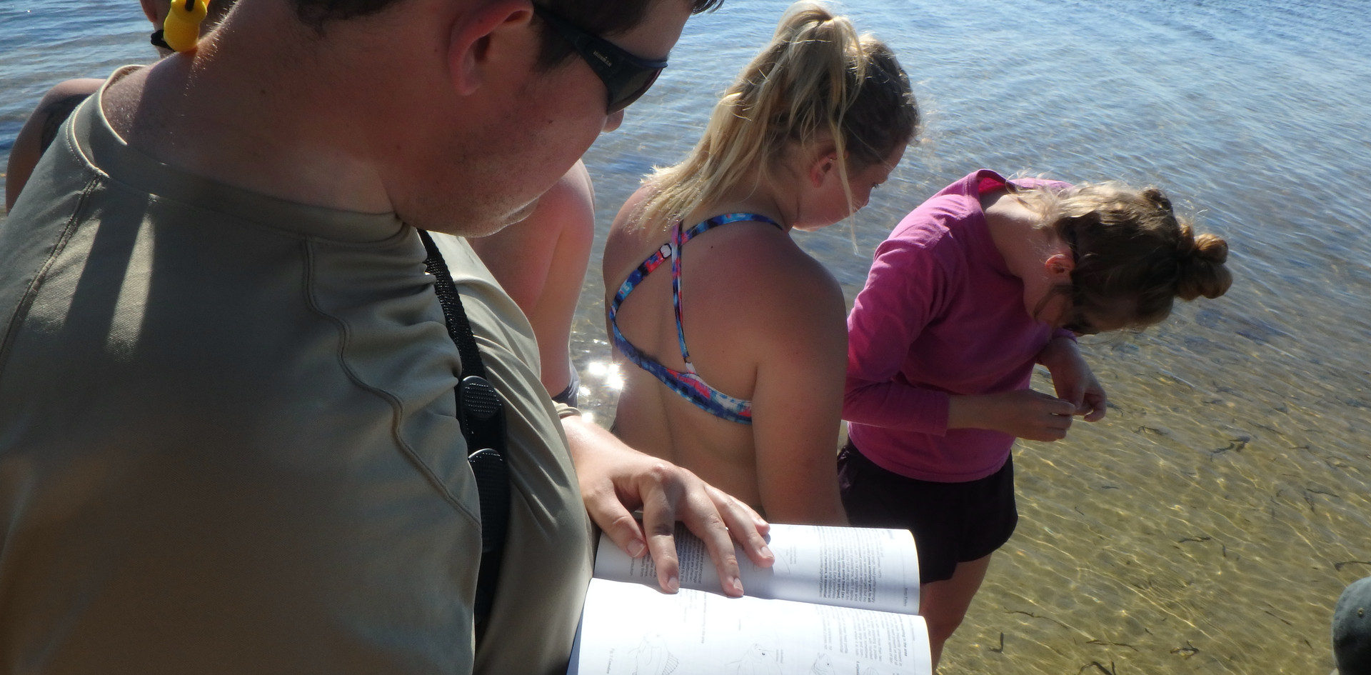 Field identification of fish
