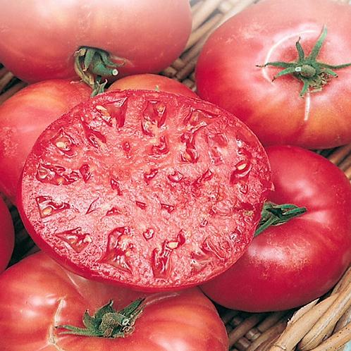 Mortgage Lifter Tomato Plant