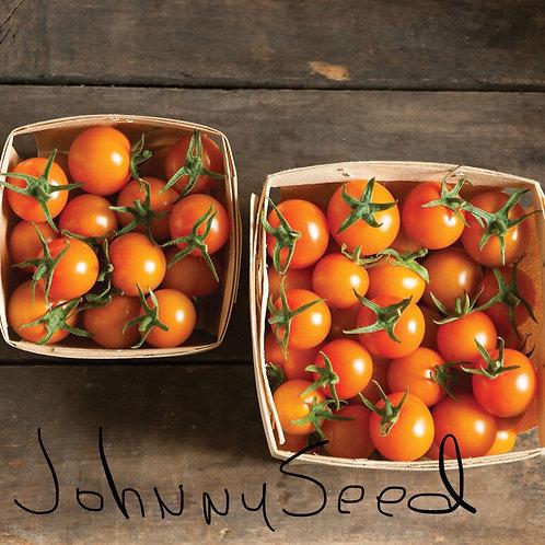 Sun Gold Cherry Tomatoe Plant