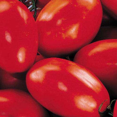 San Marsano Tomato Plant