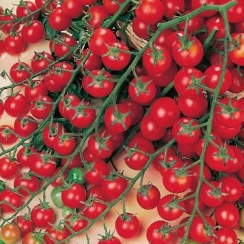 Super Sweet 100 Cherry Tomatoe Plants
