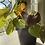 Thumbnail: Beefsteak begonia