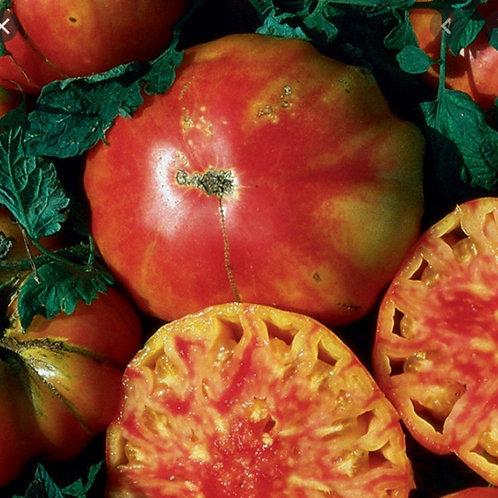 Hillbilly Tomato plants.