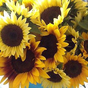 sunflowers for Loveland Farmers Market t