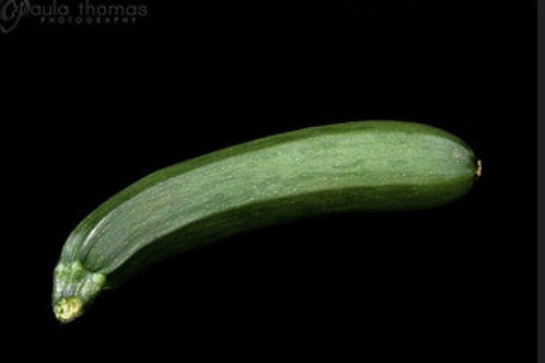 BLack Zucchini Plant