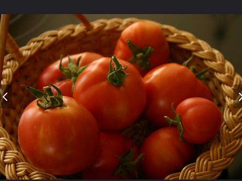 Better Boy Tomatoe Plants