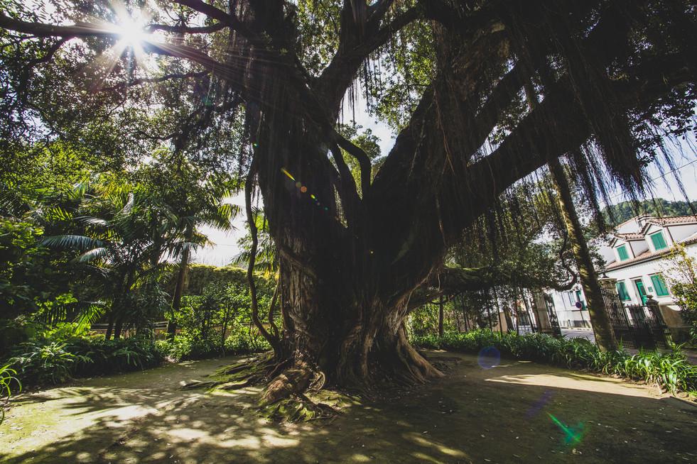 Açores-10.jpg