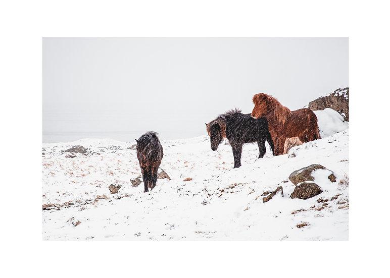 Horses under a snow storm