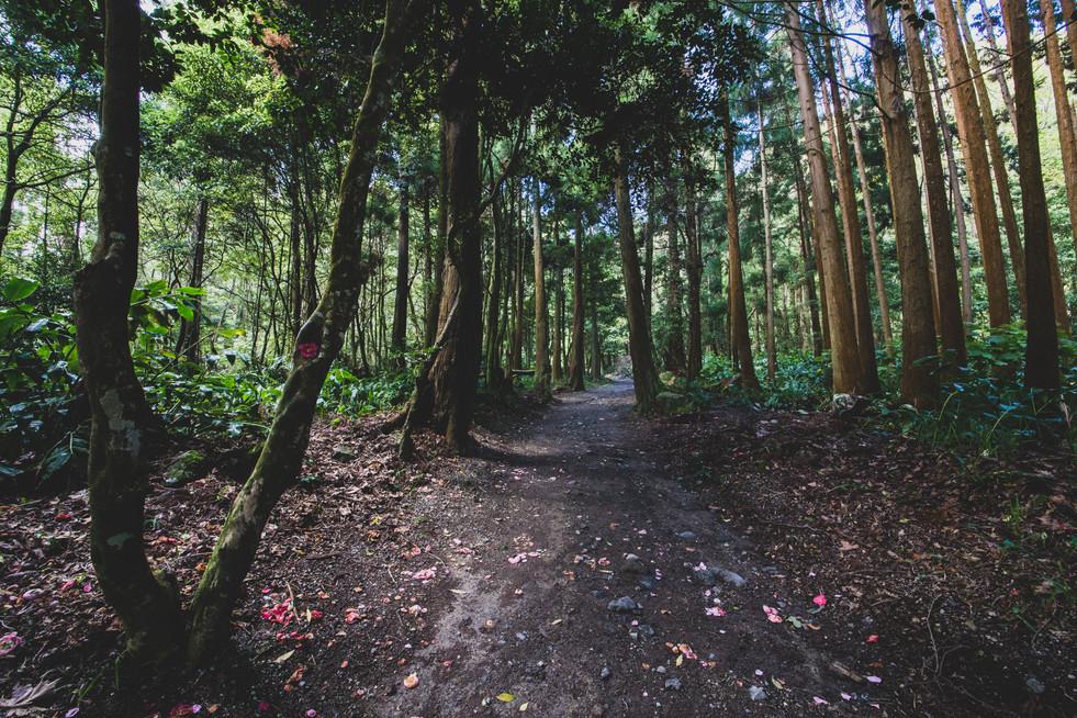 Açores-5.jpg