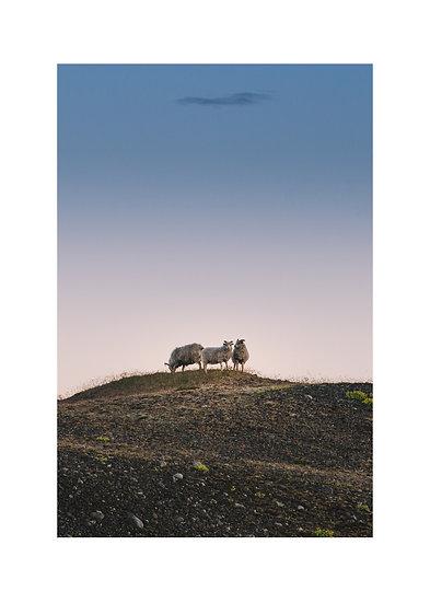 Icelandic Trio