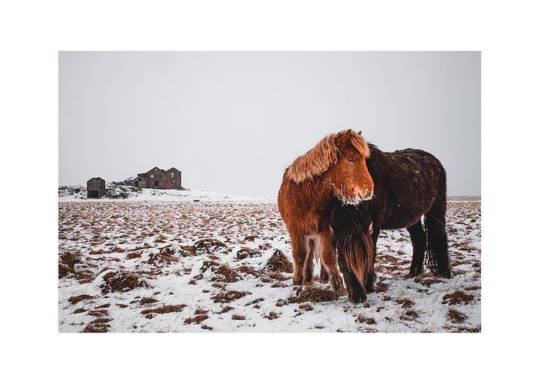 Cold Horses
