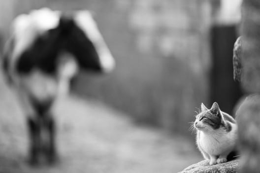 Fotografia de Animais