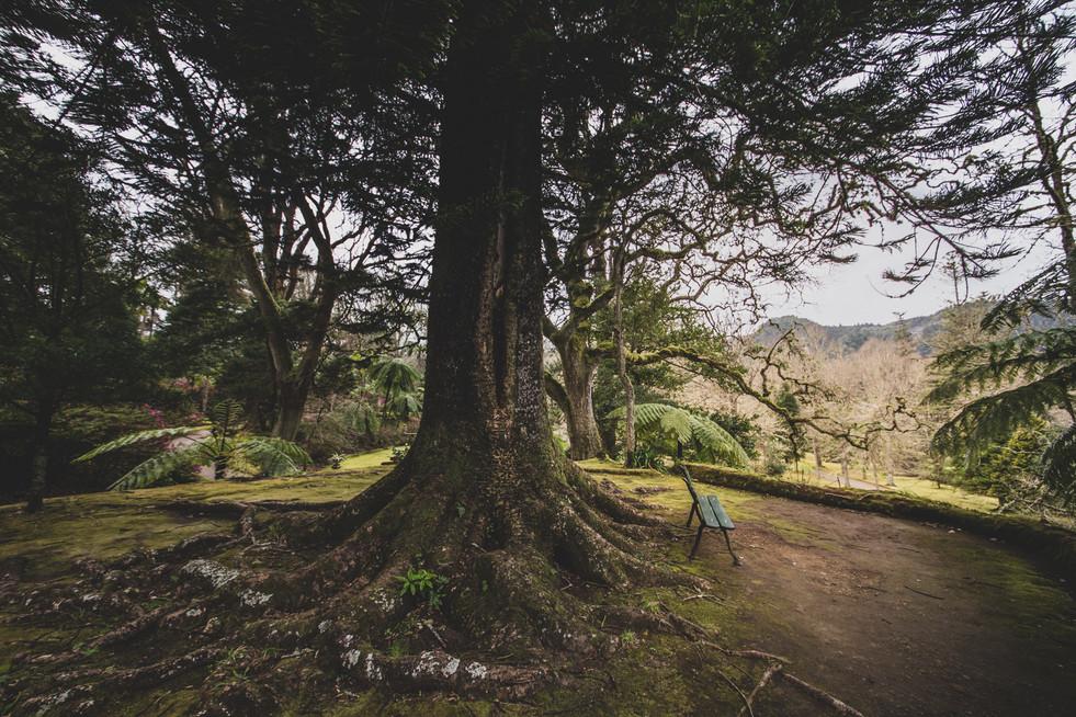 Açores-22.jpg