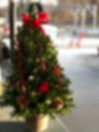 Boxwood Tree.JPG