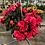 """Thumbnail: 8"""" Reiger Begonia Hanging Basket"""
