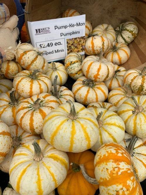 Mini Pumpkin - Pump-ke-mon Striped