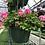 """Thumbnail: 10"""" Geranium Hanging Basket"""