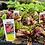Thumbnail: Vegetable Plant 6-pack