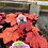 Thumbnail: Heuchera Coral Bells 1 gallon pot