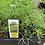 Thumbnail: Herb Plant 6-pack