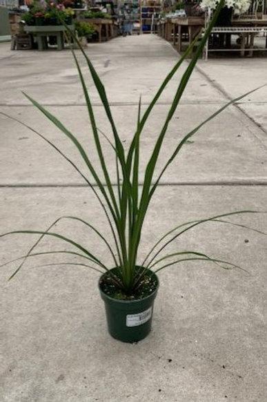 "Spike Plant 4.25"" Hart's Pot"