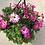 """Thumbnail: 10"""" Petunia Hanging Basket"""