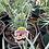 Thumbnail: Dianthus Garden Pinks 1 gallon pot