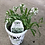 Thumbnail: PW Lobularia Alyssum