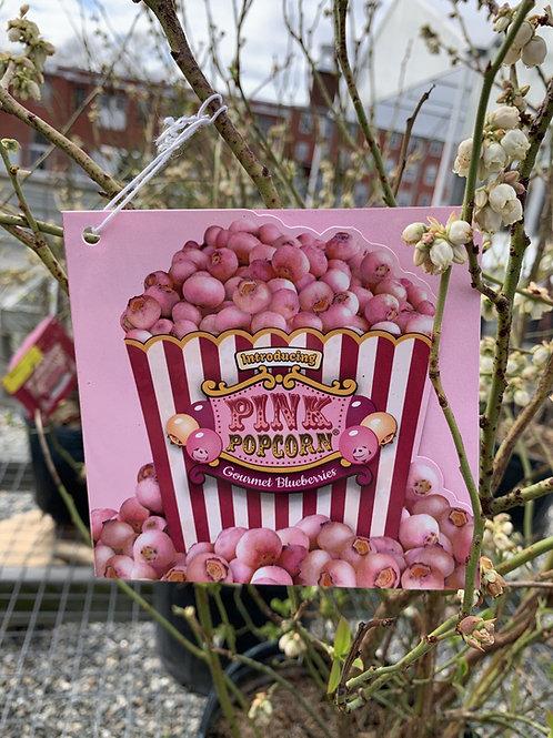 Blueberry 'Pink Popcorn' 3gallon pot