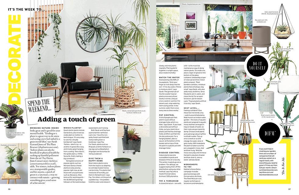 Indoor plants .jpg
